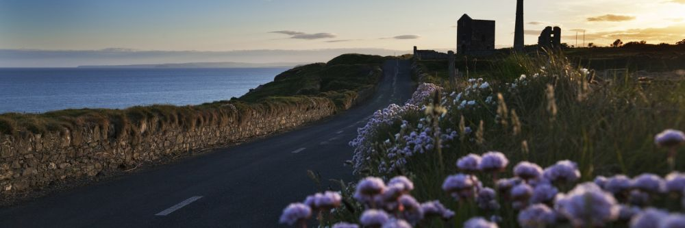 Flowers on a coastal road in County Waterford