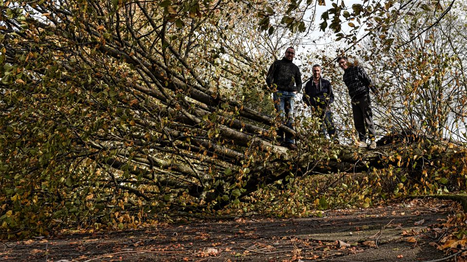 Staff on top of fallen tree after Hurricane Ophelia